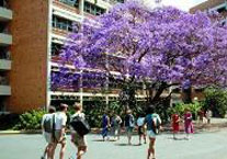 The University of Queensland Homepage
